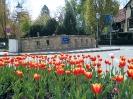 Frühlingsboten am Place de Castelnau - ehemals Schimmelbrücke