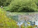 Kurpark Bad Sachsa - Teich mit Seerosen