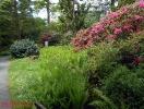Rhododendron-Blüten im Bad Sachsaer Kurpark