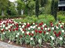 Tulpenmeer am Eingang zum Kurpark