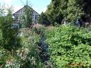 Pflanzenwelt an der Uffe