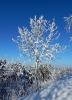 Winterstimmung 06.02.2015_1
